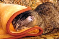 Best Outdoor Blanket for Cold Weather on Your Patio – Double No Ice Down Blanket, Throw Blanket Size, Carpet Remnants, Heated Blanket, Hallway Carpet Runners, Best Carpet, Cheap Carpet, Warm Blankets, How To Clean Carpet