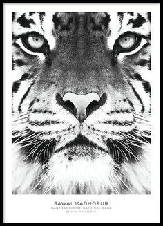Topplistan - våra mest populära posters, prints och affischer