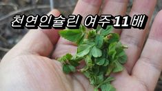 The herb disappears even if you eat only a small amount and the body becomes lighter like cotton Asian Garden, Herbs, Health, Plants, Food, Health Care, Essen, Herb, Meals