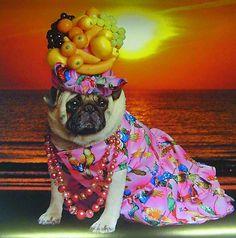 I didn't choose the pug life. The pug life chose me. Pug Halloween Costumes, Pugs In Costume, Pet Costumes, Halloween Puppy, Carmen Miranda, Baby Pug Dog, Funny Animals, Cute Animals, Pugs And Kisses