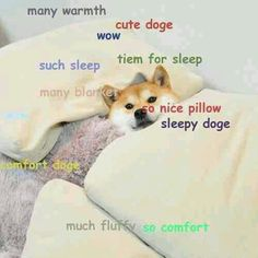 Doge warfare Doge Pinterest Doge Shiba and Dog