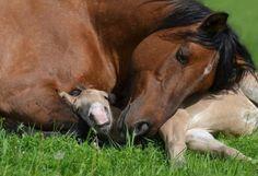 Spanielopolis   scarlettjane22: Equestrian Lifestyle Magazine