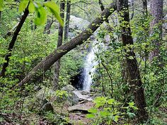Oak Mountain State Park, an Alabama State Park located nearby Alabaster, Bessemer and Birmingham = Alabama's largest park.  Belham