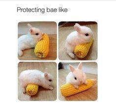 Awwww! Such a cute bunny!