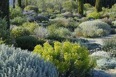 Plantes pour jardin sec / Pépinière Filippi