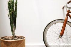 Wooden bicycle x Cactus