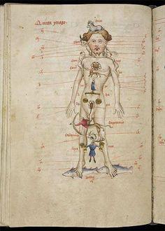 Zodiac Man: Man as Microcosm in the Medieval Worldview [Homo Signorum; Medieval Medicine and Astrology; Medieval Manuscript, Medieval Art, Illuminated Manuscript, Astrology Numerology, Astrology Zodiac, Renaissance Image, Tarot, Anthropologie, Anatomy Art