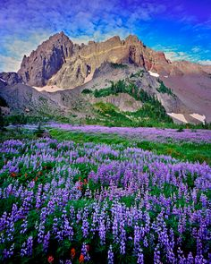Three Fingered Jack and Canyon Creek Meadow. Oregon.  Mike Putnam Photography