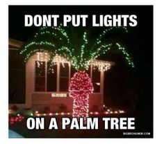 So This Is Why You Should Never Put Lightings On A Palm Tree Crude I Know But Laughed Out Loud Thinking About My Friend Who Missing Her Trees