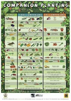 Great chart on companion planting (what to plant next to each other to create natural pest control)