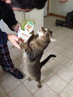 猫草授与式