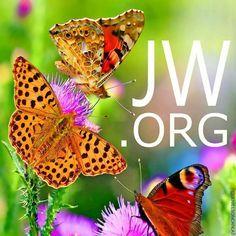 JW - Google Search