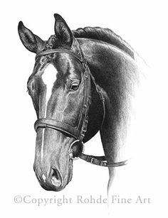 """Heart of Gold"" -- original graphite portrait of Warmblood dressage horse by Heather Rohde (Visit www.RohdeFineArt.com for more!)"