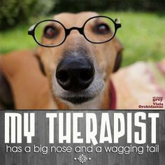 Greyhounds make great therapy dogs! Some day I will have another rescue! Greyhound Art, Italian Greyhound, Funny Dogs, Cute Dogs, Lurcher, Hound Dog, Dogs And Puppies, Doggies, Dachshunds