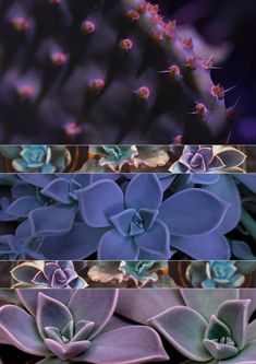 Phyllotaxis: Maths creates Beauty & Symmetry in Nature + Free Collages & Mood Boards Math Art, Science Art, Science Nature, Free Collage, Store Signs, Patterns In Nature, Botany, Free Design, Art Projects