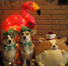 This is what I'm talkin' about!  Think of the hours of fun I could have with my Squishable corgi and my real corgi!  I am seeing my future Christmas card in my head....  #squishable #cutengeeky