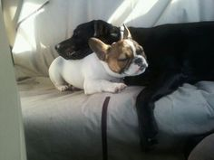 Dogs love each other no matter what color or size