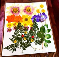 Pressed Flowers | Cool DIY Scrapbook Ideas You Have To Try