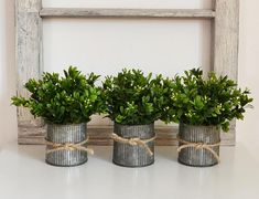 This little, farmhouse style pot of faux boxwood is a perfect room accent. Snips of boxwood are growing in a galvanized, rustic tin. Boxwood Plant, Boxwood Topiary, Farmhouse Style, Farmhouse Decor, Modern Farmhouse, Painted Tin Cans, Artificial Boxwood, Natural Interior, Rustic Kitchen Decor