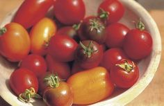 Selecting and Growing Great Paste Tomatoes. This article will help make your decision a little easier. Read it here http://www.vegetablegardener.com/item/3610/selecting-and-growing-great-paste-tomatoes