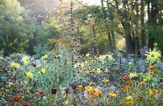 Piet Oudolf » Voorlinden Private Garden, Plants, Outdoor, Design, Colors, Gardens, Outdoors, Colour