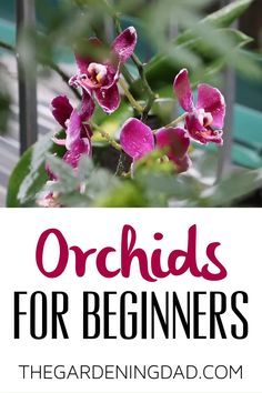 Indoor Orchid Care, Orchid Plant Care, Indoor Orchids, Orchids Garden, Orchid Plants, Growing Orchids, Growing Flowers, Planting Flowers, Flower Gardening