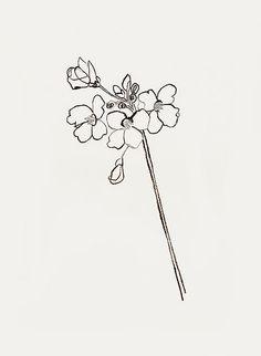 'cuckoo flower' by bernadette pascua