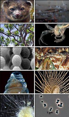 Top 10 Species | Top 10 New Species