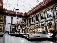 National museum in Berlin, Germany. Dinosaurs.   Check out for more travel tips about Berlin!