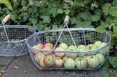 mmm....in de oogstmand www.marjokedeheer.com