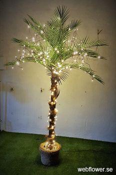 Kanarie palmen Phoenix med belysning 230cm