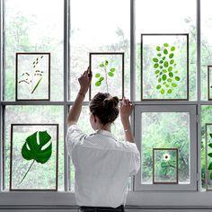Neuframe__window