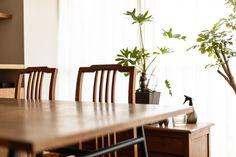 【EcoDecoスタッフ岡野の自邸リノベーション】テーブル奥の棚は、以前テレビ台として使っていたもの。今は観葉植物や可愛らしい焼きものが置かれていた。#ダイニング #棚 #テレビ台 #植物 #焼きもの #小物 #EcoDeco #エコデコ #インテリア #リノベーション #renovation #東京 #福岡 #福岡リノベーション #福岡設計事務所