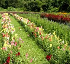 pick your own bouquet. New England States, Future Farms, Funny Farm, Flower Gardening, Hobby Farms, Small Farm, Cabins In The Woods, Dream Garden, Farm Life