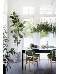 When a little bit of greenery is never enough