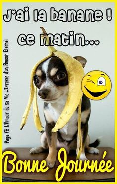 J'ai la banane ce matin... Bonne... Cute Good Morning Gif, Gifs Cute, Smiley Happy, Tu Me Manques, Happy Friendship Day, Emoji Faces, Emoji Wallpaper, Morning Humor, Good Vibes