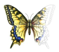 Papillon Machaon Papillo. Aquarelle Unfinished Dessin D'imitation. Clip Art…