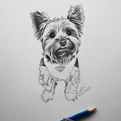 Jake the Super Yorkie!