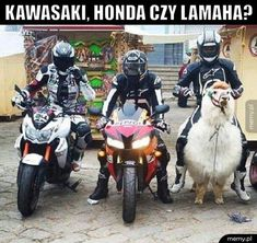 Memy motocykl / motocykl memy (#motocykl) - Memy.pl Happy Animals, Animals And Pets, Best Memes, Funny Memes, Polish Memes, Reaction Pictures, Good Mood, Puns, Haha