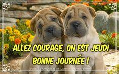 https://i.pinimg.com/236x/1c/f9/5f/1cf95f62ce12c449fc64b388d3cba2c9--shar-pei-puppies-courage.jpg