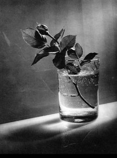 Still life / Josef Sudek, rose button
