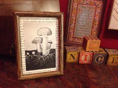 Naturalist Mushroom Illustration  by DatCoolKat on Etsy