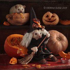 family portrait with pumpkins by Elena Eremina