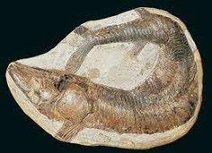 A região do Geopark Araripe possui uma das maiores jazidas fossíliferas do período Cretáceo do Brasil e do mundo, o que nos permite conhecer a espetacular biodiversidade que se desenvolveu entre 120 a 100 milhões de anos. A preservação desta vasta riqueza de fósseis foi propiciada por condições singulares durante a evolução da Bacia do Araripe, possibilitando um excepcional estado de conservação da diversidade paleobiológica.