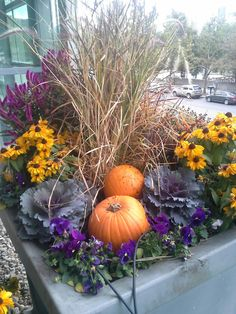 Fall container gardens made simple at Earl May! Fall container gardens made simple at Earl May! Shade Plants Container, Container Flowers, Container Gardening, Fall Flower Pots, Fall Flowers, Wedding Flowers, May Garden, Autumn Garden, Garden Plants