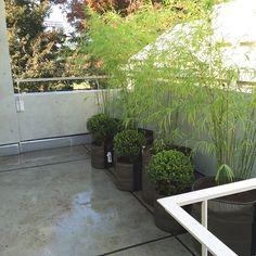 Une terrasse qui prend vie grâce aux plantes plantées dans des pots de fleurs ronds BACSAC en géotextile (pots de 50L et 100L)