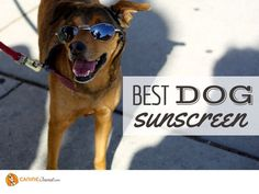 Best Dog Sunscreen: Protect Your Pup From The Sun Dog Goggles, Boxer Bulldog, Sun Dogs, Dog Nutrition, Dog Boots, Dog Nose, Hiking Dogs, Natural Sunscreen