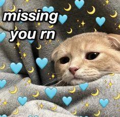 Cute Cat Memes, Cute Love Memes, Stupid Funny Memes, Love You Meme, Minions, Flirty Memes, Current Mood Meme, Snapchat Stickers, Crush Memes