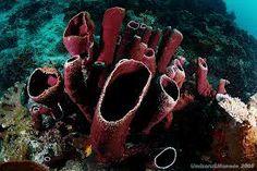 organ pipe coral - Google Search