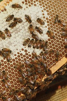 After winter, do you know when it's time to put #HoneySupers on your #beehives? http://www.beeculture.com/ask-phil-4/